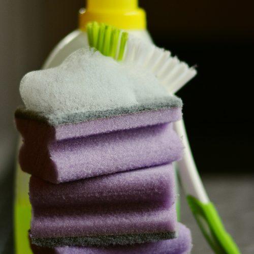sponge-2546126_1920